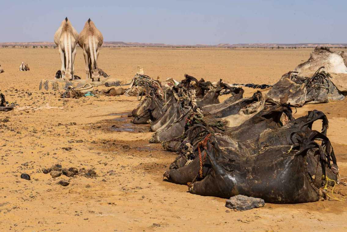 Sudan Bisharin 2